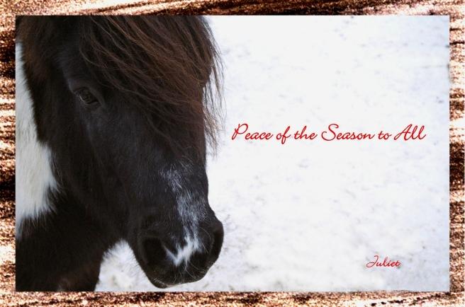 2015 Seasons Greetings_edited-1